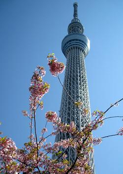 Sakuratree